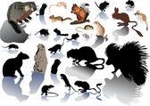 Set di rodentson bianco — Vettoriale Stock