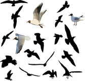 Nineteen gulls collection — Stock Vector