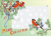Bouvreuil und sapin branches christmas illustration — Vecteur