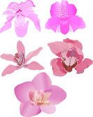 Vijf roze orchideeën — Stockvector