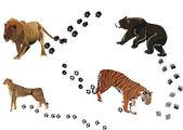 Predators and its tracks — Stock Vector