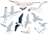 Gulls collection on white — Stock Vector