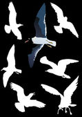 Gulls collection on black — Stock Vector
