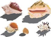 Shellfish collection — Stock Vector