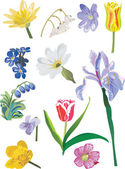 Spring wild flowers on white — Stock Vector