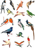 Isolated small birds collection — Stock Vector