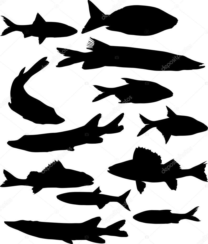 Stock Vector Dr Pas 6261329: Set Of Twelve Fish Silhouettes