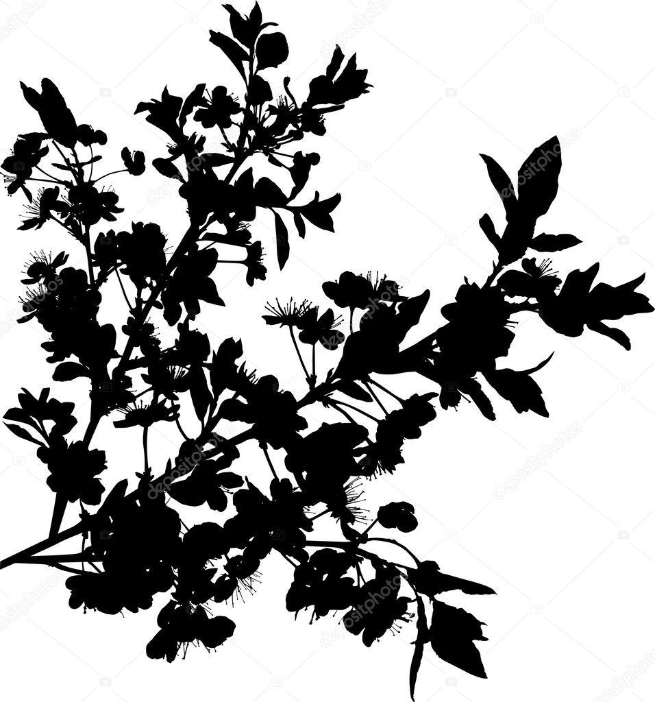Stock Vector Dr Pas 6261329: Black Sakura Branches On White