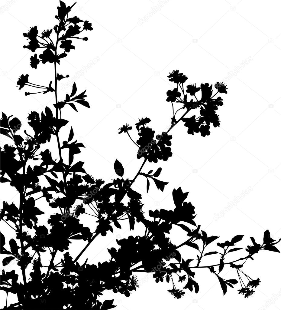 Stock Vector Dr Pas 6261329: Black Sakura Branches With Flowers