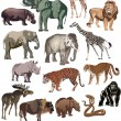 Color animals large collection — Stock Vector #6648966