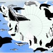 Vector de stock : Set of antarctic animals and birds