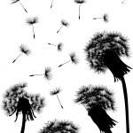 Dandelion field silhouette — Stock Vector #6649354