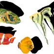 Four tropical fishes on white background — Imagen vectorial