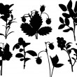 Set of forest berries silhouettes isolated on white — Stock Vector