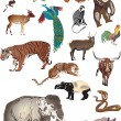 Set of indian animals collection — Stock Vector #6649704