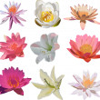Nine isolated lily flowers collection — Stock Vector #6649784