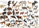 Huge collection of color animals — Stock Vector