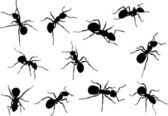 Eleven isolated ant silhouettes — Stock Vector