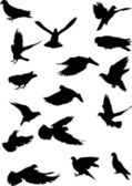 Sixteen pigeon silhouettes — Stock Vector