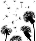 Dandelion field silhouette — Stock Vector