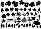 Set of isolated leaves silhouettes — Stock Vector