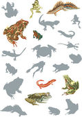 Reptile and amphibian collection — Stock Vector
