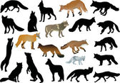 Set of foxes and wolves isolated on white — Stock Vector