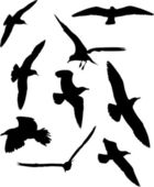 Set of gull silhouettes — Stock Vector