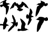 Set of eight gull silhouettes — Stock Vector