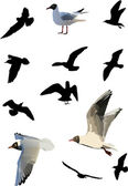 Twelve gulls collection — Stock Vector