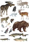 Set of polar animals — Stock Vector