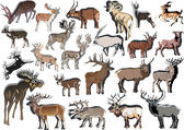 Twenty three horned animals collection — Stock Vector