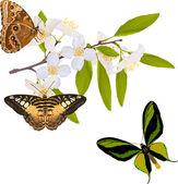 Jasmine branch with three big butterflies — Stock Vector
