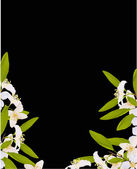 White jasmin flowers half frame — Stock Vector