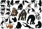 Large set of different monkeys — Stock Vector