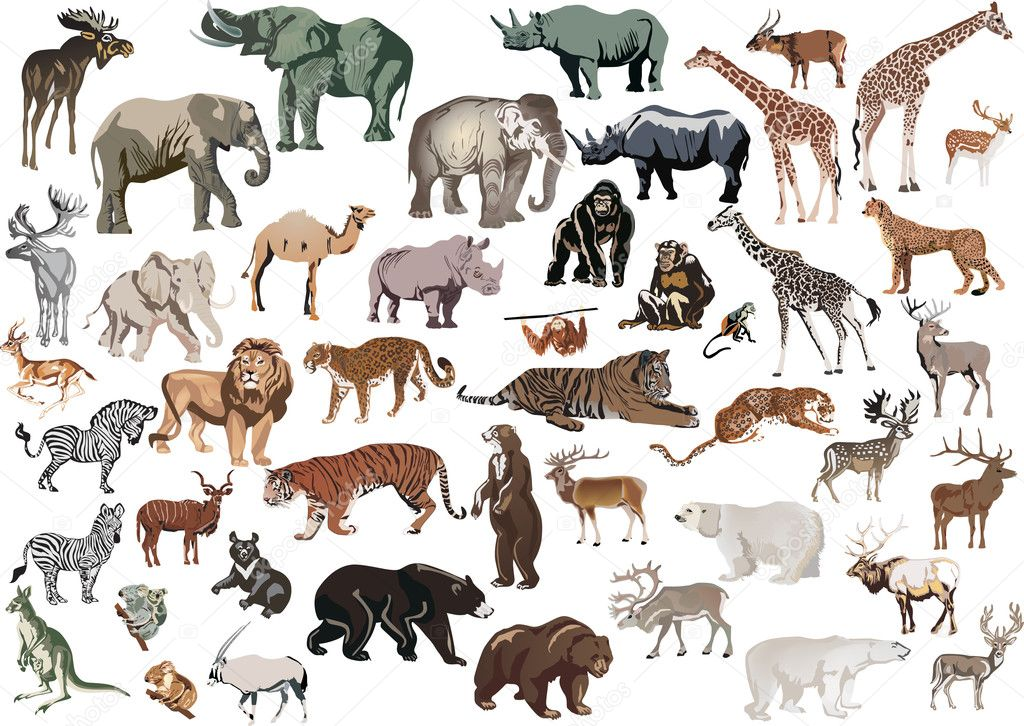 animals collection isolated illustration background huge cheetah vector running depositphotos shutterstock fox same pas dr