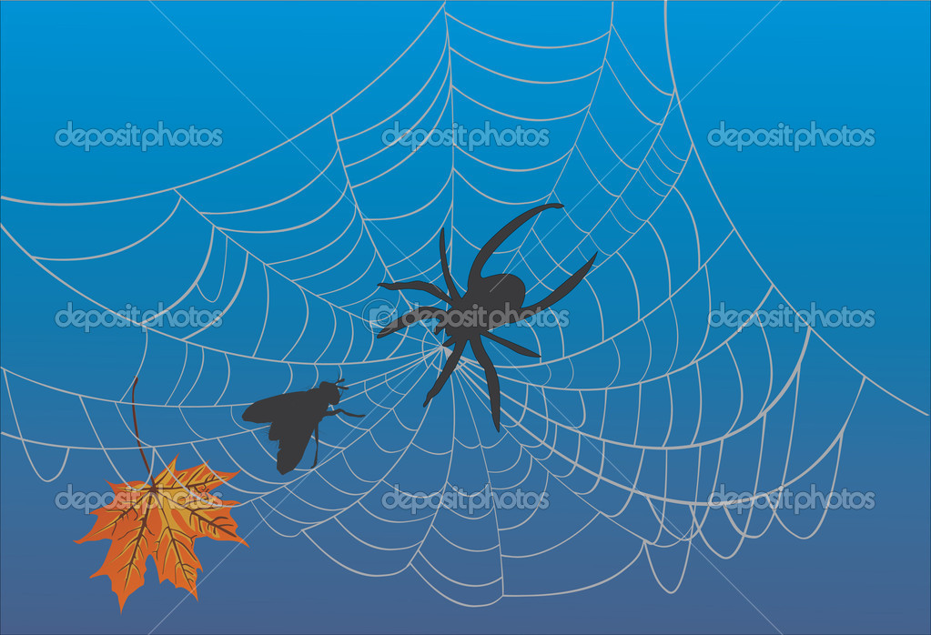 Illustration with spider web and fly — Stock Vector #6649265