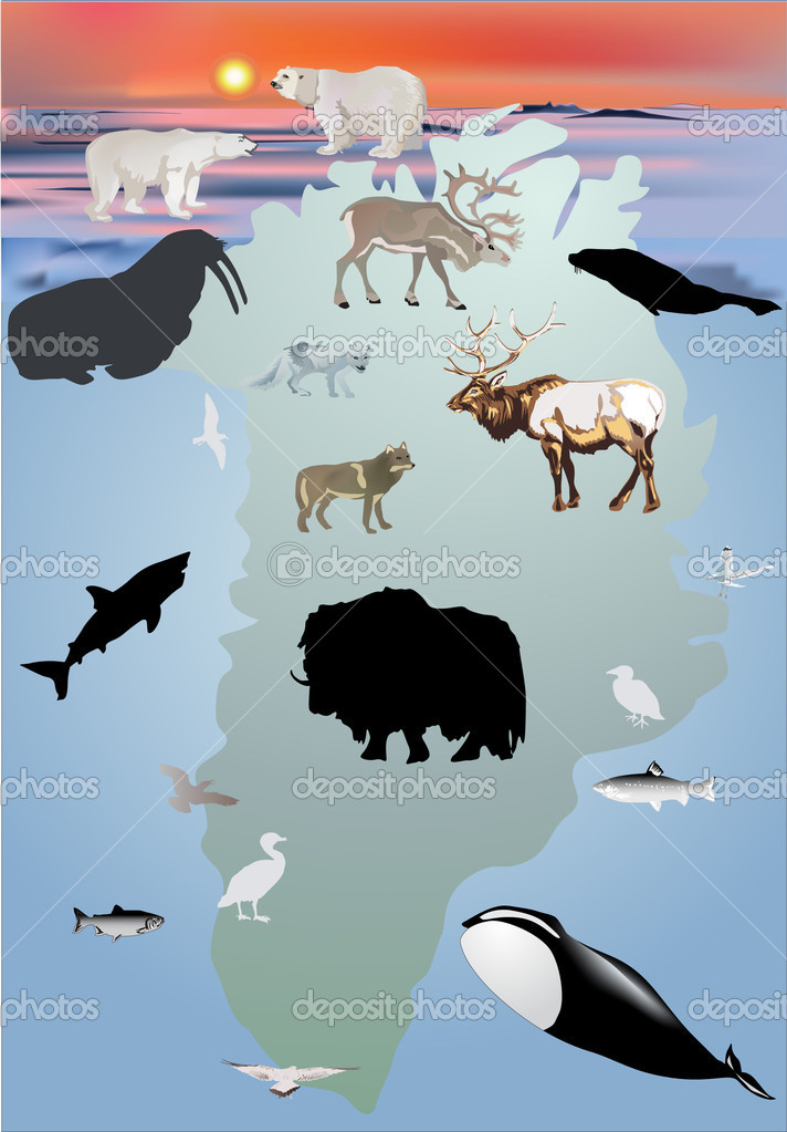 Illustration with Greenland animals collection — Stock Vector #6649357