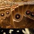 Three butterfly wing textures - Foto Stock