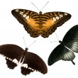 Three tropical butterflies on white — Stock Photo #6650865
