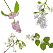 Lilac, jasmine and cherry blossom — Stock Photo