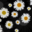 Background with white chamomile flowers — Stock Photo #6651314