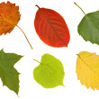 Six different leaves on white — Stock Photo