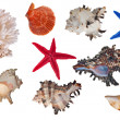 Isolated sea invertebrates collection — Stock Photo