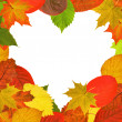 Heart shape bright autumn leaves frame — Stock Photo
