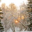 Sunset between snow firs — Stock Photo