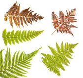 Collection of fern branch on white — Stockfoto