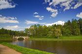 Bridge and spring trees — Stock Photo