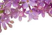 Lilac flowers pattern — Stock Photo