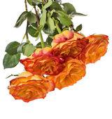 πέντε απομονωμένες πορτοκαλί ροδαλή ανθοδέσμη — Φωτογραφία Αρχείου